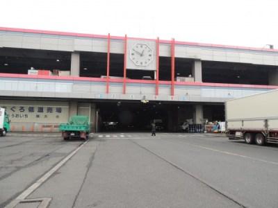 大阪中央卸売市場本場を探検してきました