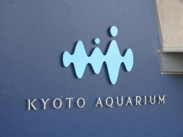 『京都水族館』で夜のイルカショーを観てきました
