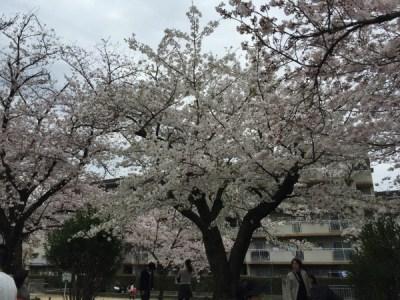 茨木市民さくらまつり BBQ出来るお花見会場