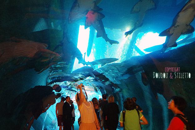 underwater zoo dubai mall