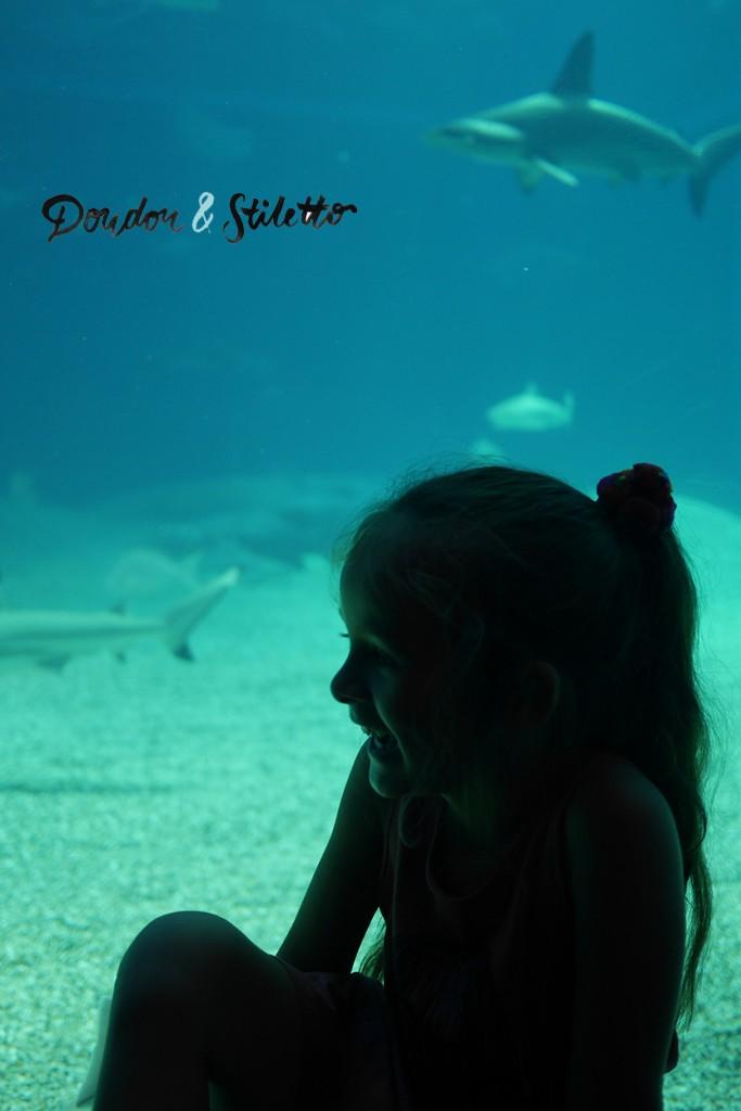 Aquarium Osaka