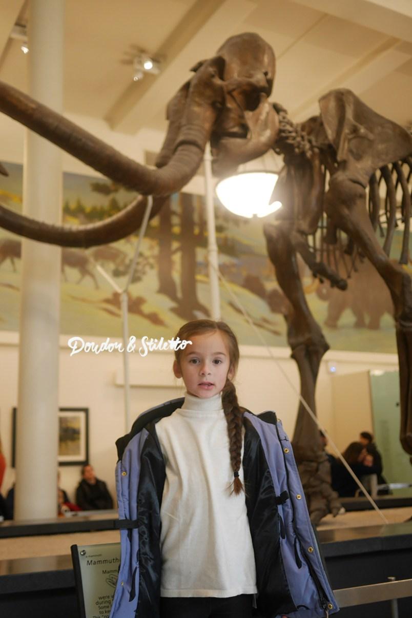 Musée d'histoire naturelle new york