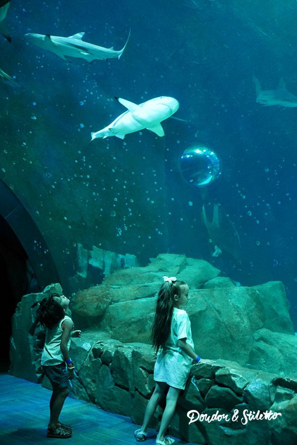 Peppa Pig Aquarium de Paris11