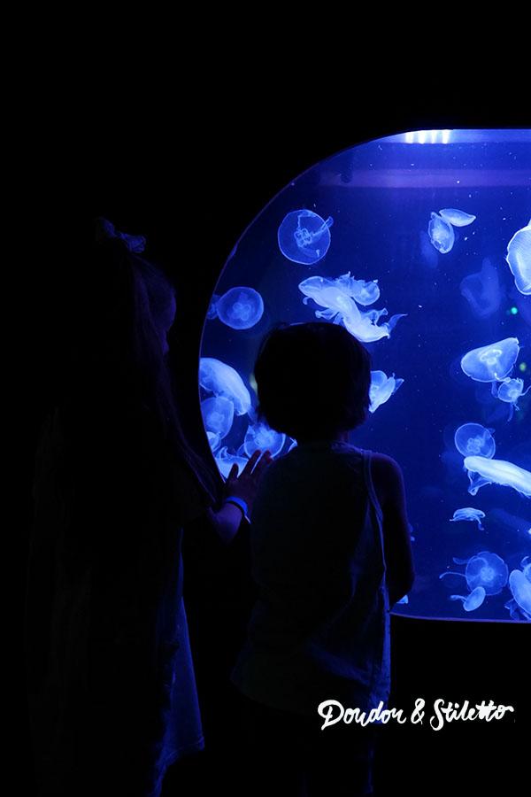 Peppa Pig Aquarium de Paris7
