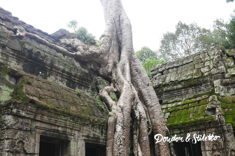 Ta Phrom Angkor 3