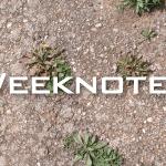 Weeknote 05/2013