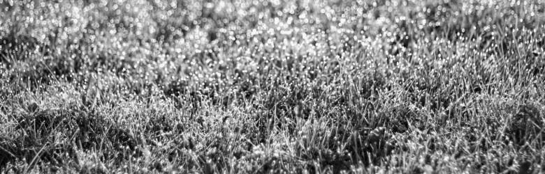 star-grass
