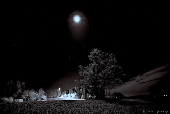 winternightbw
