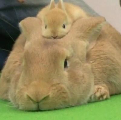 Rabbits wallpaper - downloadwallpaper.org