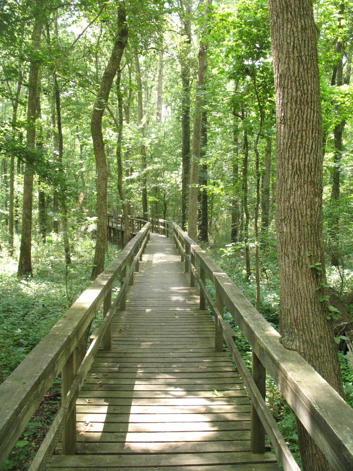 Pic of Real Boardwalk in Woods