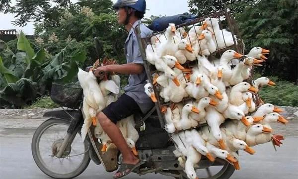 overloaded-motorcycle-18