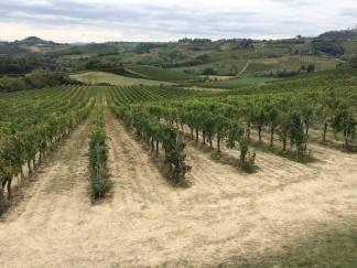 Tuscan vineyards.