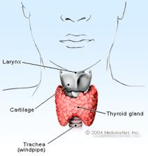 Human thyroid diagram Hypothyroidism