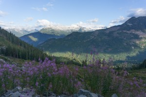 Classic Canada: clearcuts and glaciers