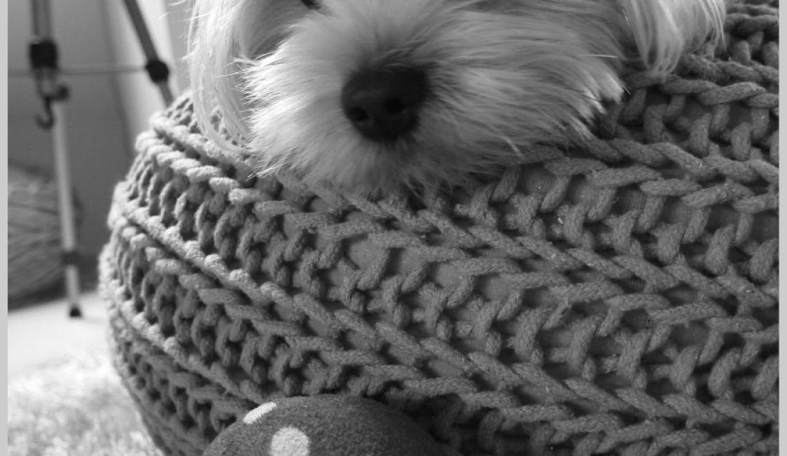 Testmonster Hund Bommel.6