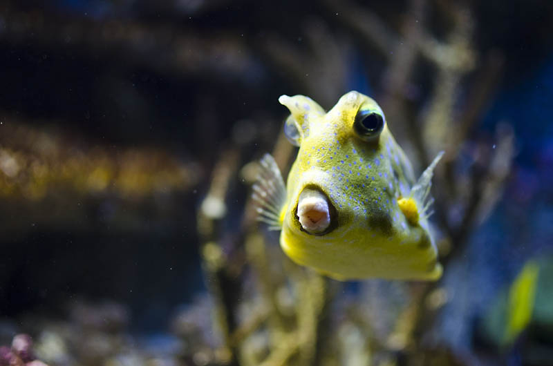 baltimore aquarium kisses from a cowfish The National Aquarium of Baltimore!