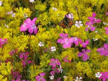 cubiertas-verdes-biodiversidad