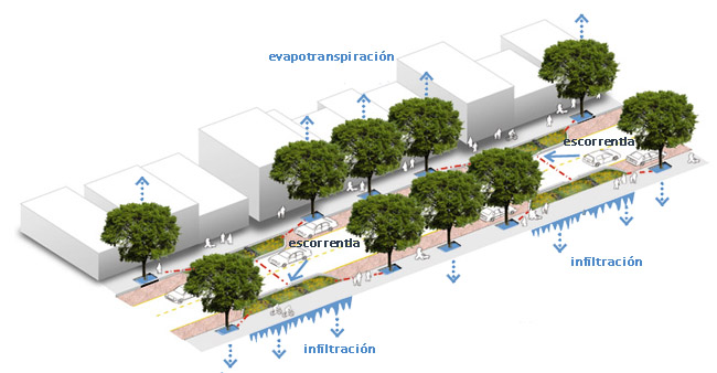 skinny-streets-planta