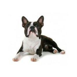 Comment apprendre l&#8217;ordre<br /> couché à son chien ?