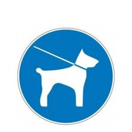Dresser son chien à marcher en laisse : techniques et astuces