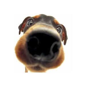 dresser son chiot entre 2 et 5 mois dresser son chien. Black Bedroom Furniture Sets. Home Design Ideas