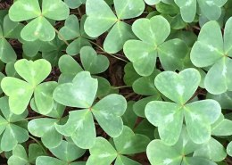 Instagram_The-Ultimate-List-of-Paleo-Recipes-for-St.-Patrick's-Day-
