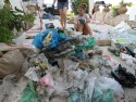 Plastic Free Island – in ACTION!~