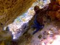 Oceanic Society Artist-In-Nature Residency!~ Bali to Komodo