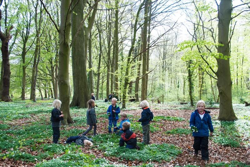 デンマーク発祥の森のようちえん。子どもたちは自由に森のなかで過ごす。(矢野さん提供)