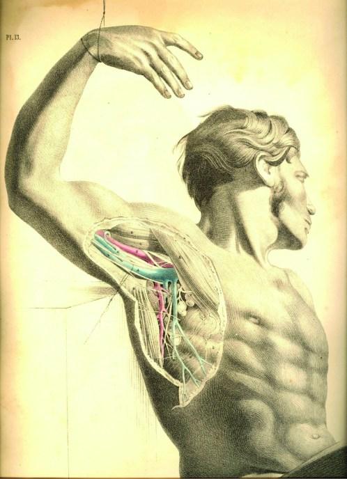 anatomyplate10a