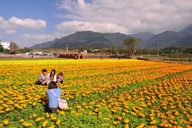 taitung-flower03