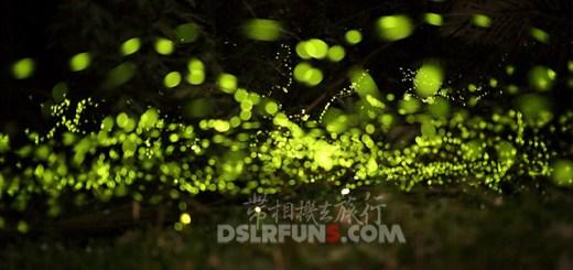firefly (1)