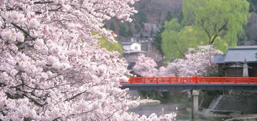 hida-takayama-sakura
