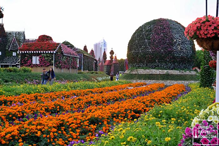 dubai miracle garden flower display