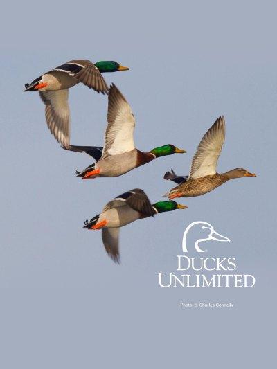Ducks Unlimited Mobile Wallpaper