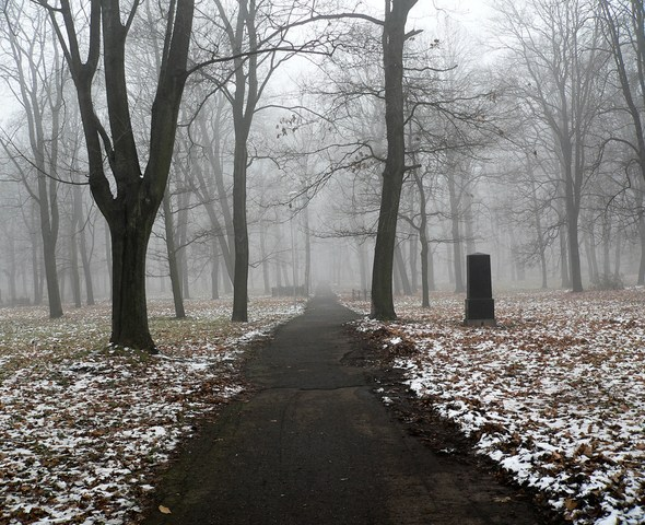 Light snow and fog on a trail with trees