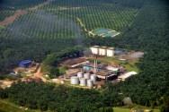 Produsen CPO Mulai Diversifikasi Usaha ke Pembangkit Biogas