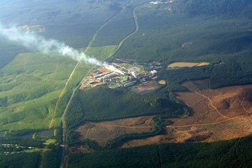 Gimni Proyeksikan Produksi Kelapa Sawit RI Tumbuh 20%