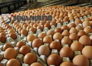 telur-duniaindustri
