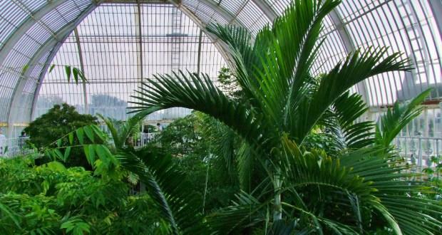 zielone-atrakcje-w-londynie-ogrody-palmiarnie
