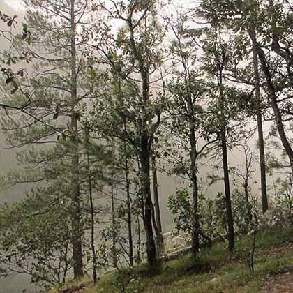 Cascada Salto del agua (4)