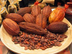 cacao.01