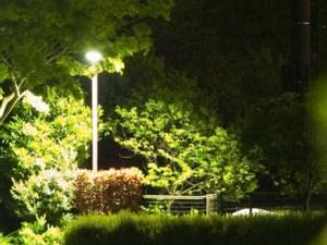 井草の森公園 -100502-11
