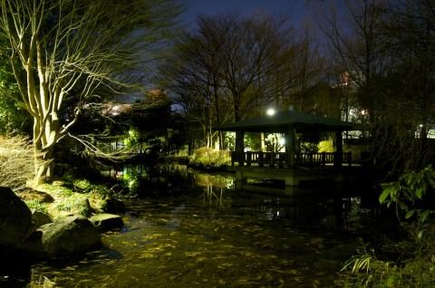 井草の森公園 3