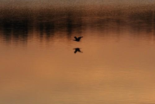 日の入_多摩湖 - 3