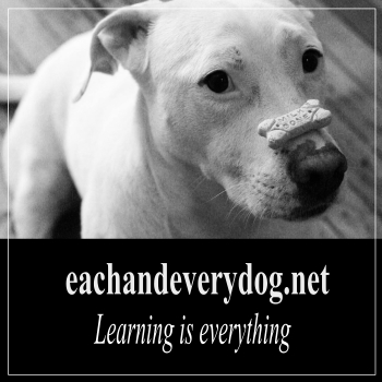 each and every dog featured image