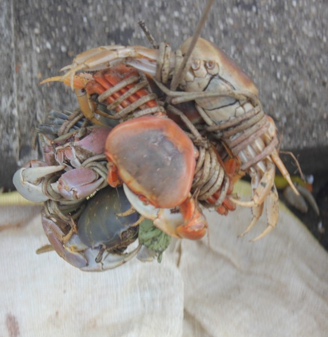 Land crabs at the market, Grenada