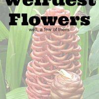 Just a Few of the World's Weirdest Flowers
