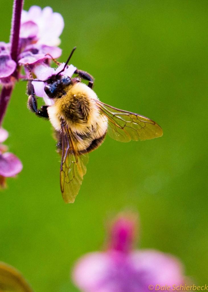 Pollen Feast