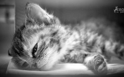 …a névtelen kiscica emlékére